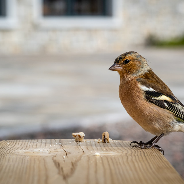 """Bird on Table"" stock image"