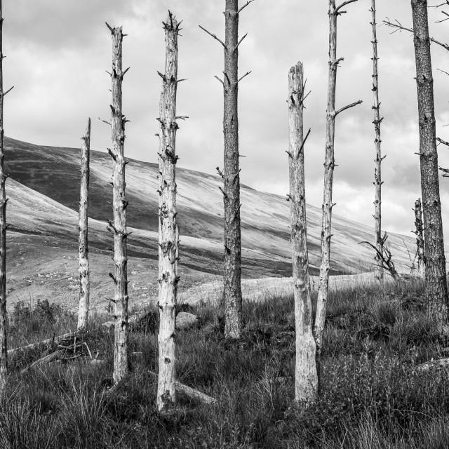 """Dead Trees"" stock image"