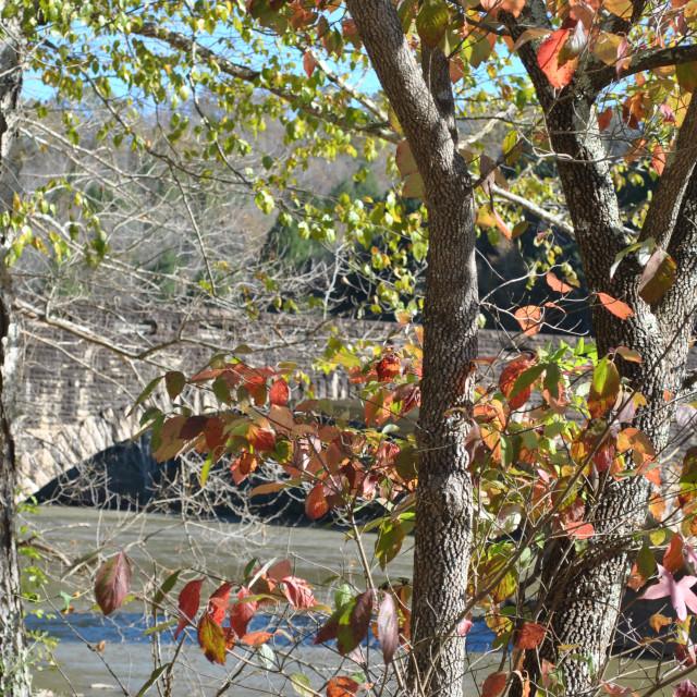 """""""BRIDGE WITH TREES"""" stock image"""