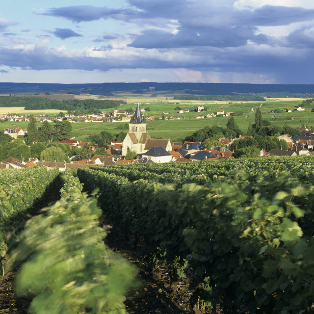 """""""View over Champagne vineyards to the village of Villedommange from the chapel..."""" stock image"""