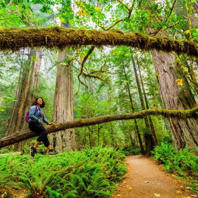 """""""Woman exploring Mount Shasta Forest."""" stock image"""