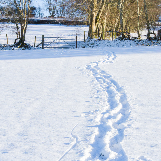 """""""Footprints in the Snow"""" stock image"""
