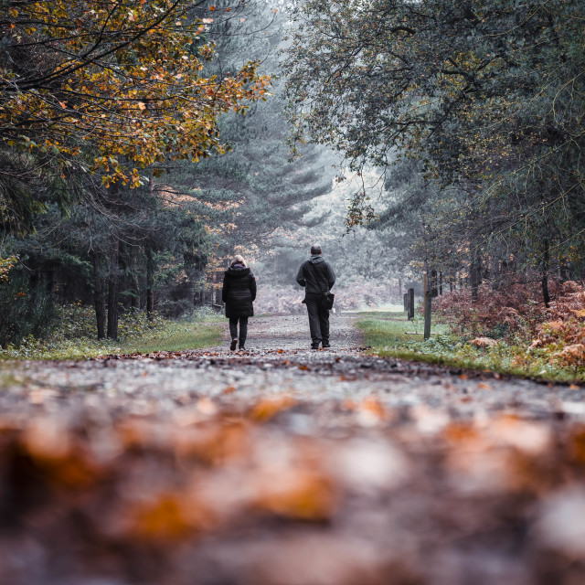 """A misty Autumn morning walk from High Lodge, Thetford Forest, Brandon UK."" stock image"