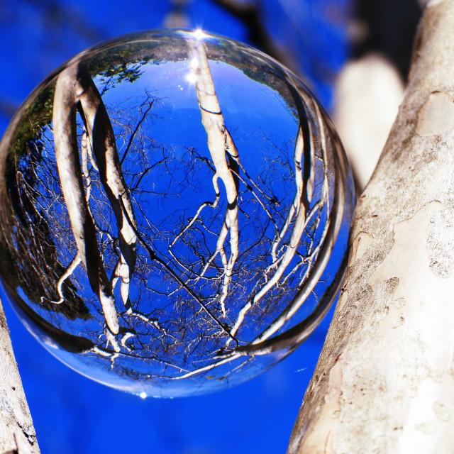 """Crystal Ball on Barkless Tree"" stock image"