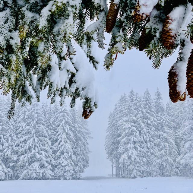 """A snowy day in Val Gardena, Dolomites."" stock image"