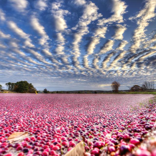 """""""Cranberry Sunrise"""" stock image"""