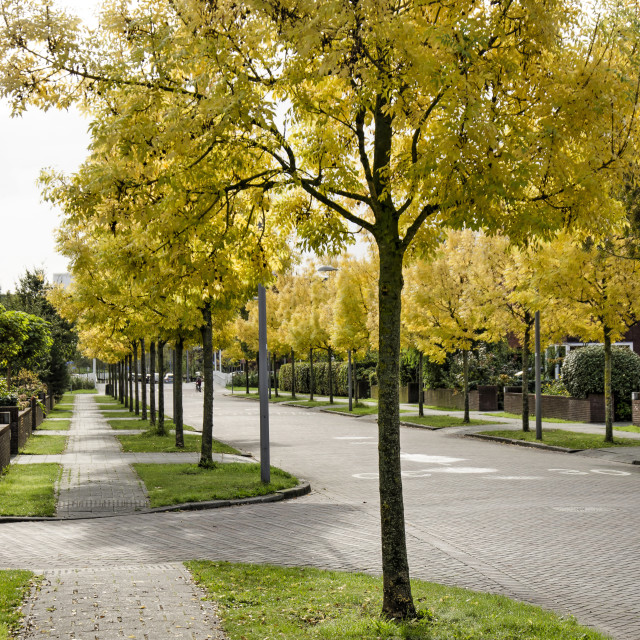 """""""Street with ash trees in autumn"""" stock image"""