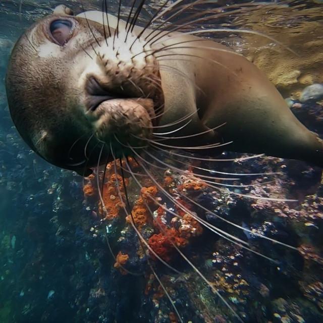 """baby sea lion"" stock image"