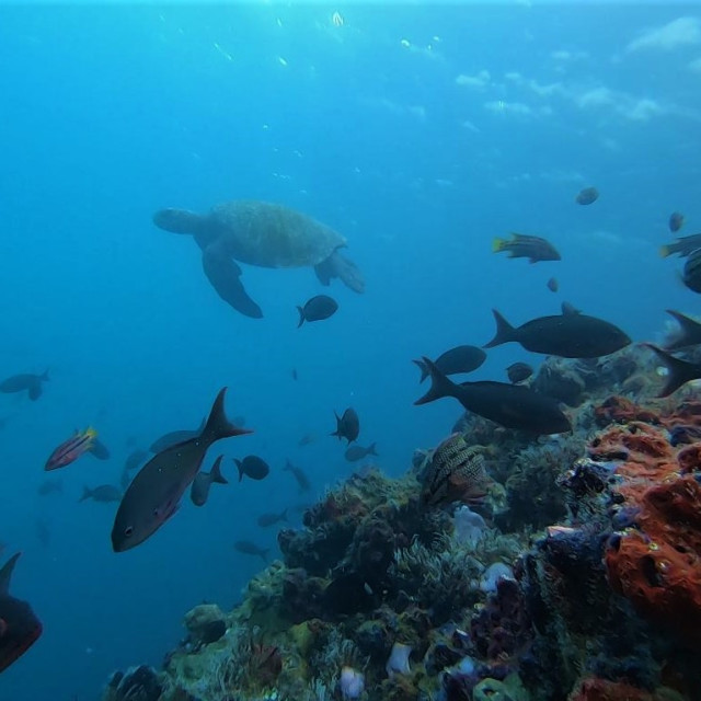 """""""Marine landscape"""" stock image"""