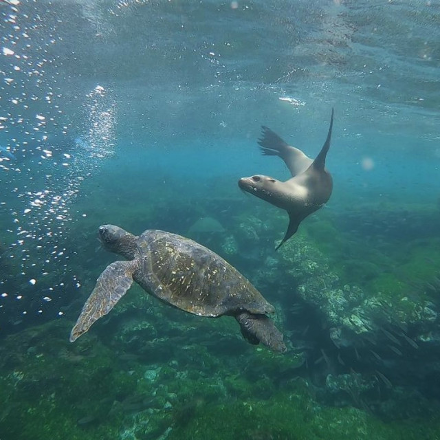 """""""Sea lion and Turtle"""" stock image"""