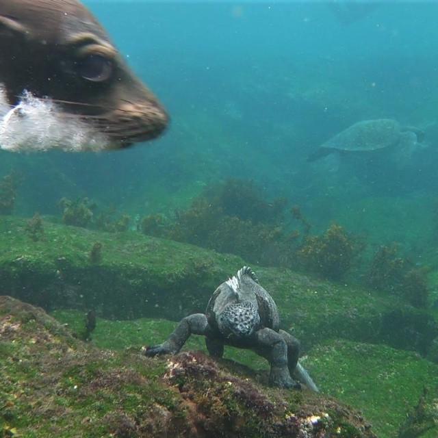 """Sea lion photobomber"" stock image"