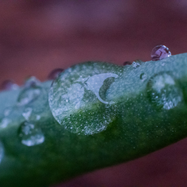 """Water Drops"" stock image"