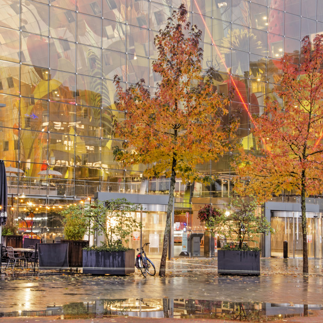 """""""Two sweetgum trees at the Markthal"""" stock image"""