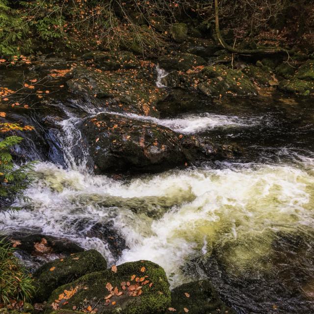 """River Erme - Autumn"" stock image"