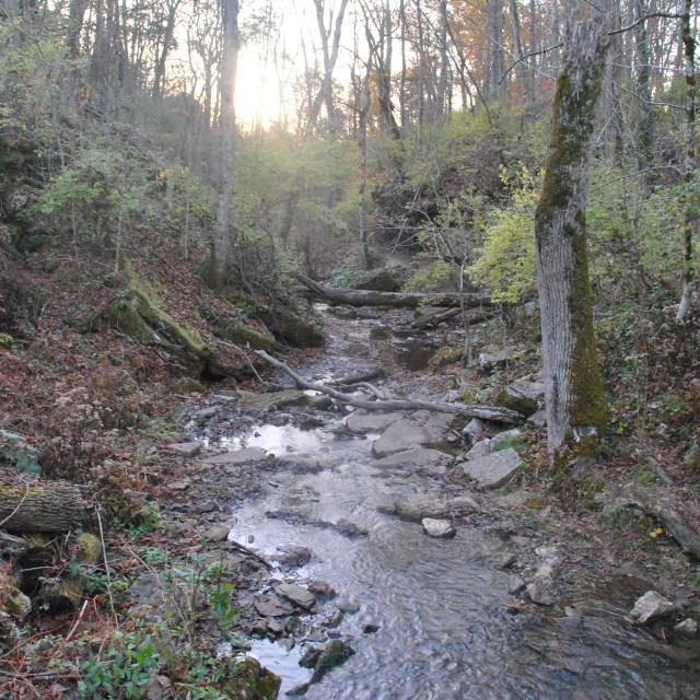 """""""Creek Bottom"""" stock image"""