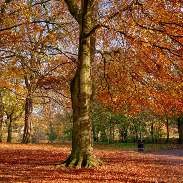 """""""Autumn in the Park"""" stock image"""