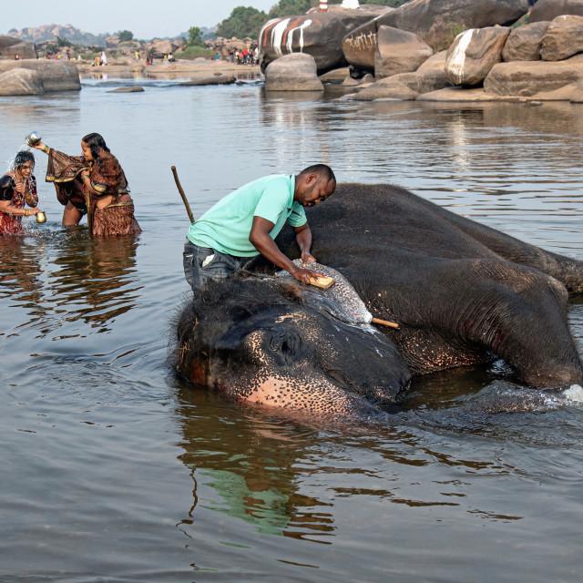 """THE ELEPHANT'S BATH"" stock image"