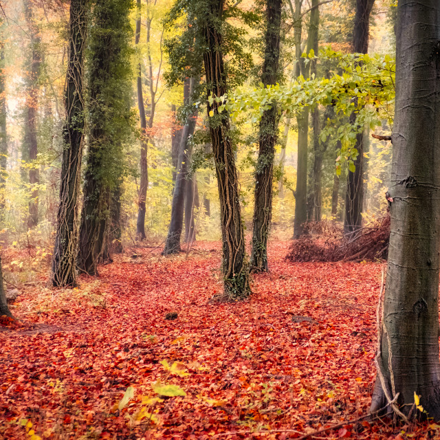 """red woodland carpet"" stock image"