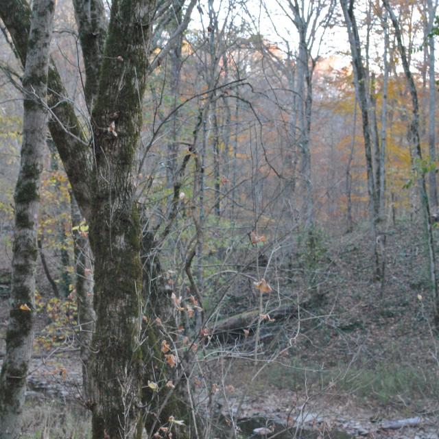 """Creek through a Tree"" stock image"
