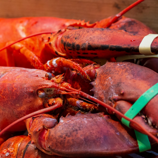 """""""Pile of live lobsters on ice in a seafood market"""" stock image"""