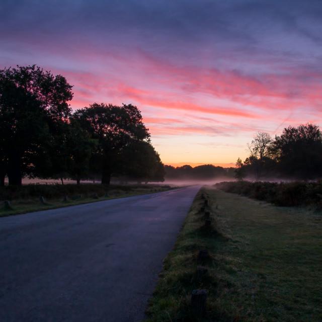"""Sunrise on a foggy morning in Richmond Park, Surrey, England"" stock image"