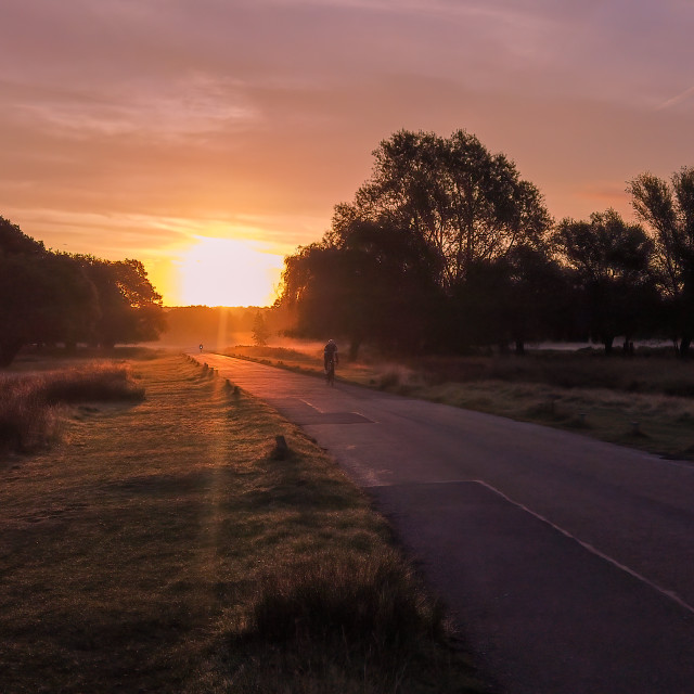 """Cyclists riding at sunrise through Richmond Park, Surrey, Englan"" stock image"