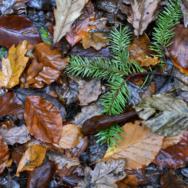 """Autumn Leaves #16"" stock image"