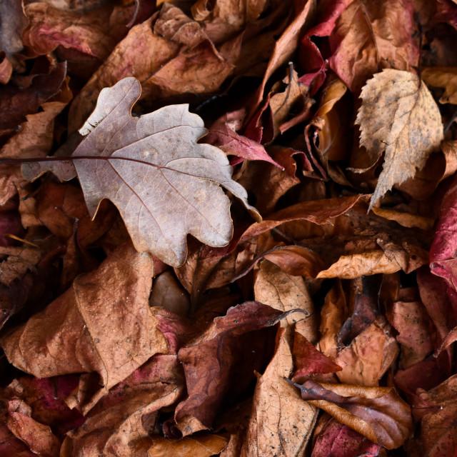 """Autumn Leaves #20"" stock image"