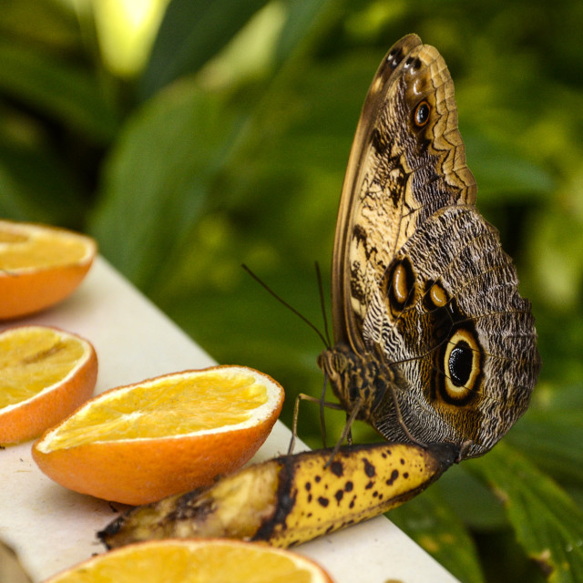"""Butterfly Farm, Aruba"" stock image"