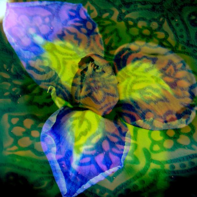 """Greek Iris"" stock image"