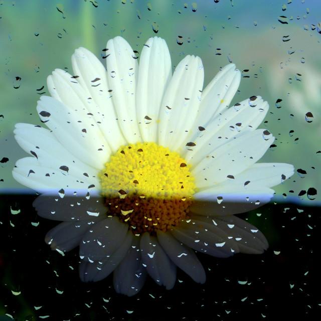 """Sun & Rain"" stock image"
