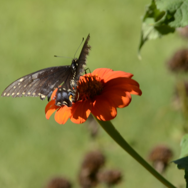 """""""Butterfly at Fanwood Nature Center"""" stock image"""