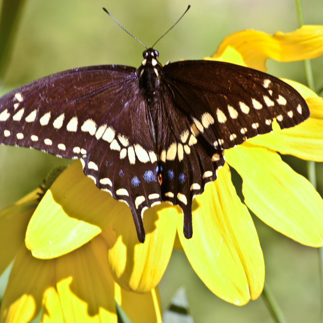 """""""Butterfly 3 at Fanwood Nature Center"""" stock image"""