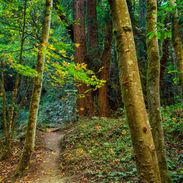 """""""Forest Trail"""" stock image"""