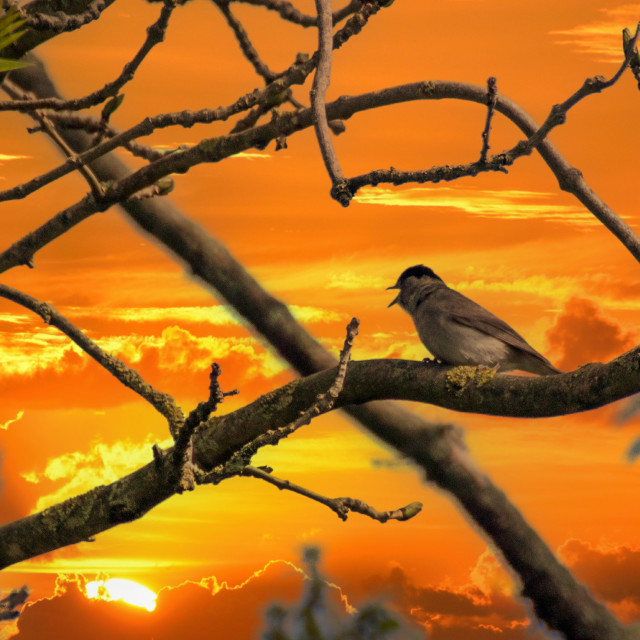 """Bird"" stock image"