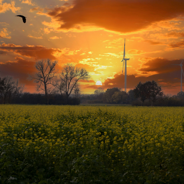 """Sonnenuntergang in Sendenhorst"" stock image"