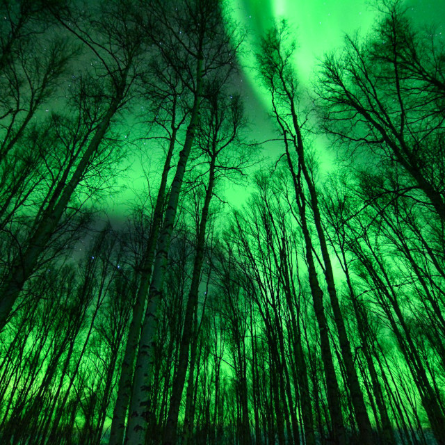 """""""Rich green forest"""" stock image"""