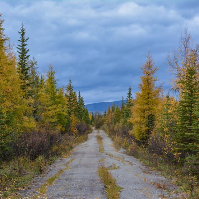 """Tamarack Trail"" stock image"