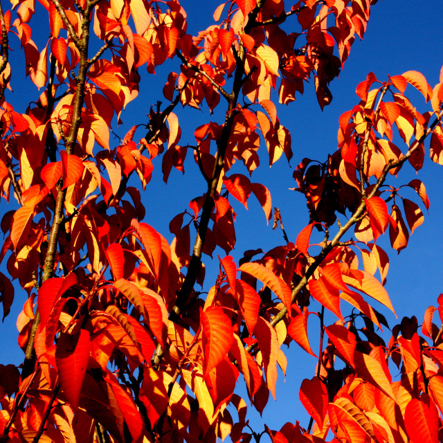 """""""Autumn Colours in Vancouver"""" stock image"""