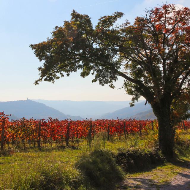 """Autumn Vibes at Slovenia"" stock image"