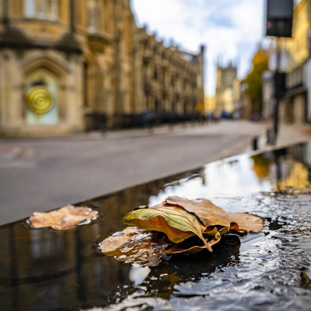 """Autumn Reflection from Kings Parade, Cambridge UK."" stock image"