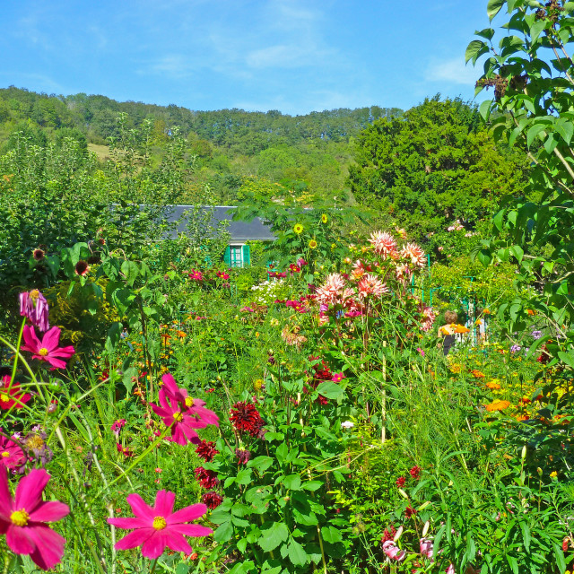 """""""Monet's Garden at Giverny France"""" stock image"""