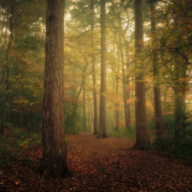 """The Pinewoods, Harrogate"" stock image"