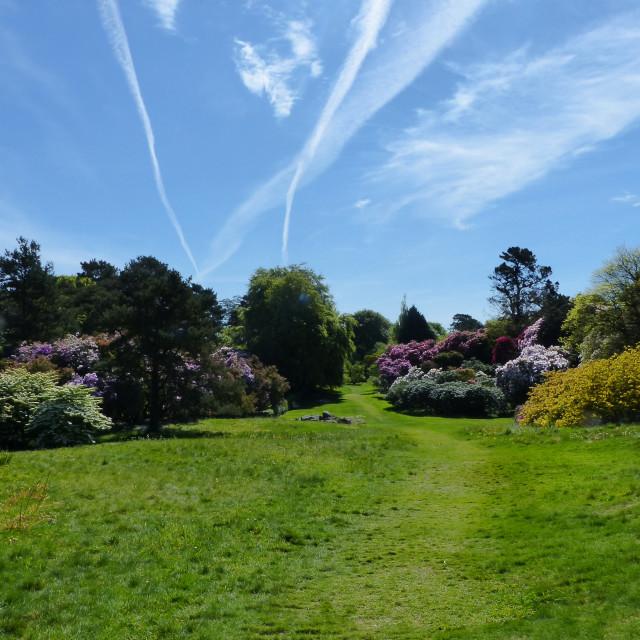 """Rowallane Gardens Rhododendron Walk 1"" stock image"