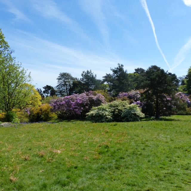 """Rowallane Gardens Rhododendron Walk 2"" stock image"