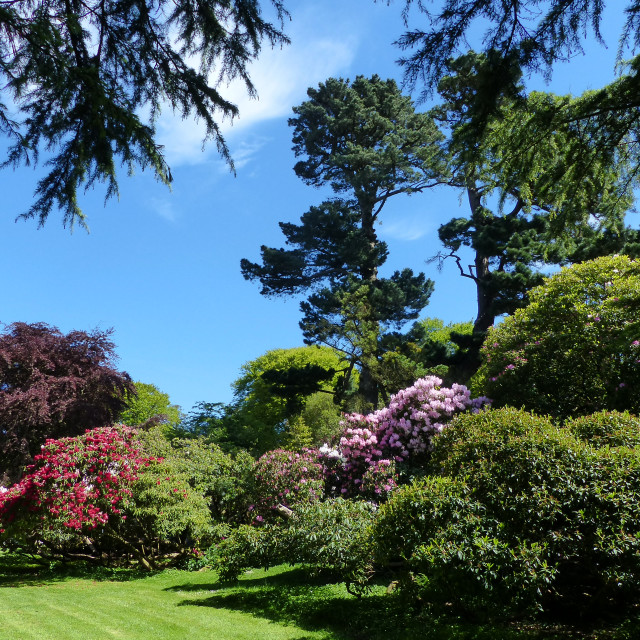 """Rowallane Gardens Rhododendron Walk 4"" stock image"