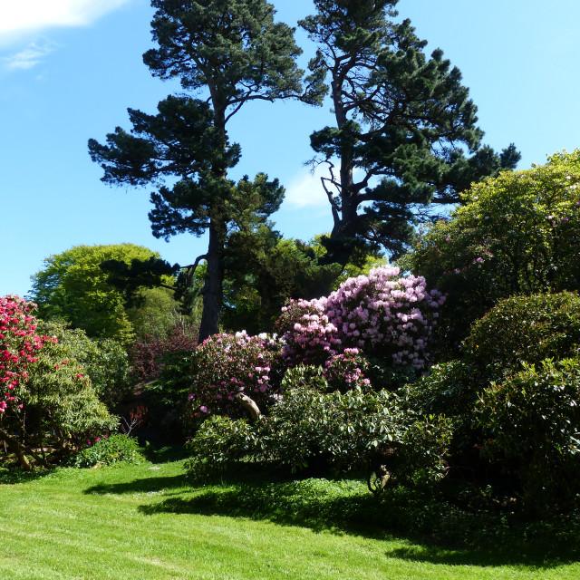 """Rowallane Gardens Rhododendron Walk 5"" stock image"
