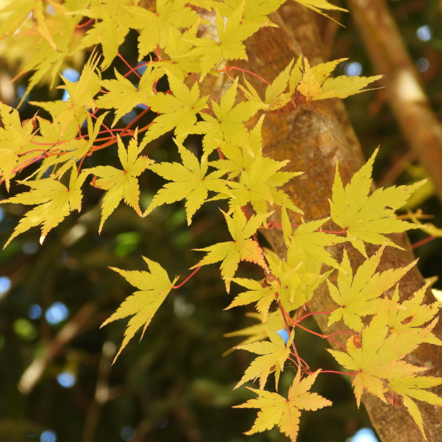 """""""Golden Leaves"""" stock image"""