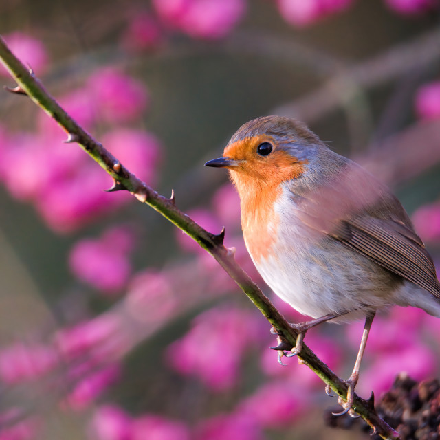 """Perched by the Blooms"" stock image"