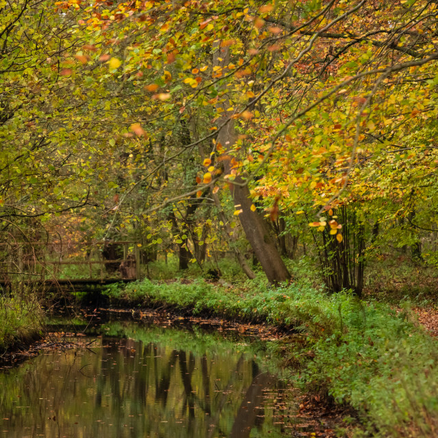 """Woodland wetlands in autumn v."" stock image"